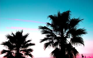 palm trees against a blue and pink sunset