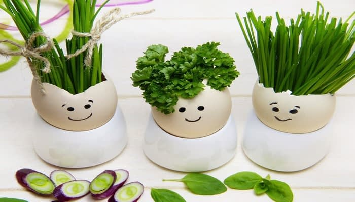 Three eggshells growing herbs in egg cups with faces drawn on