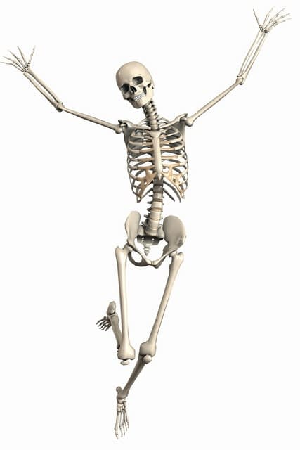 skeleton dancing