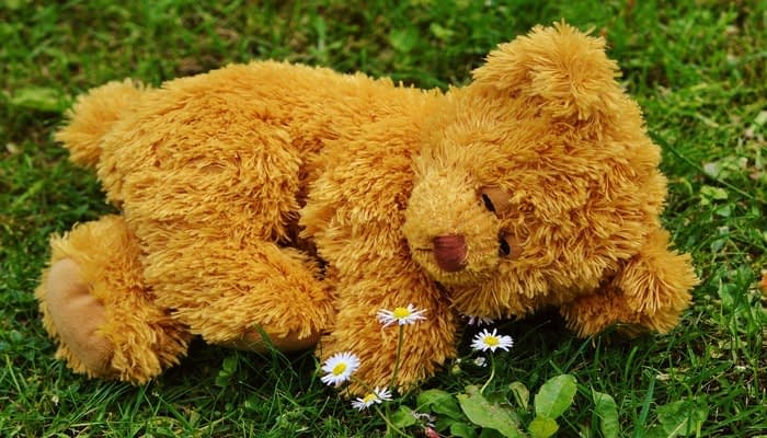 Cuddly toy bear with sleepy eyes lying on the grass