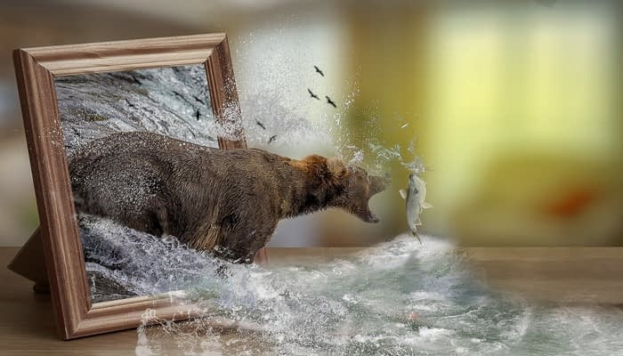 A bear bursting through a picture frame to catch salmon