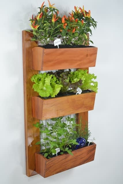 Vertical garden on the wall in wooden planter