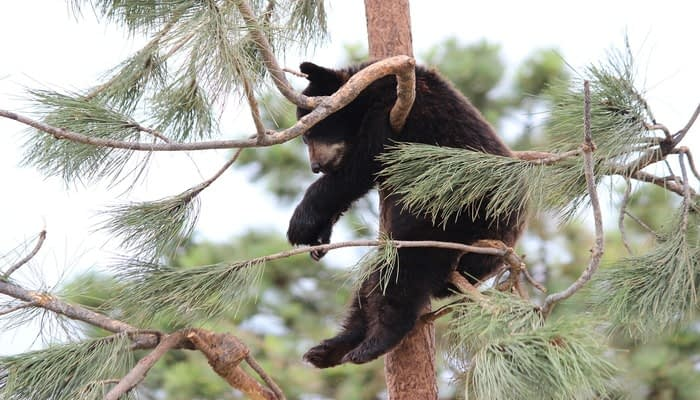 baby bear hanging from a tree sat on a branch